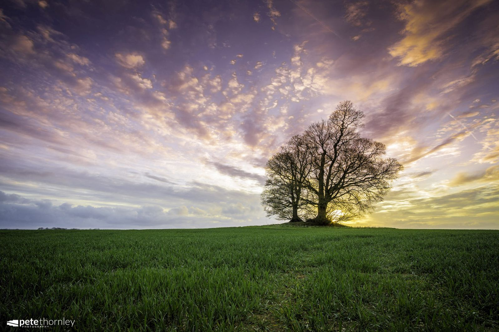 beautiful solitary tree photography pete thornley