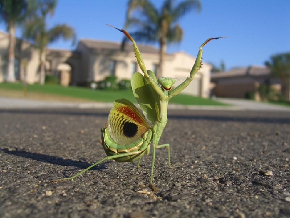 macro photography mantis