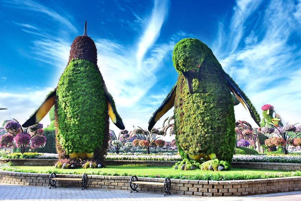 beautiful garden penguin dubai miracle garden