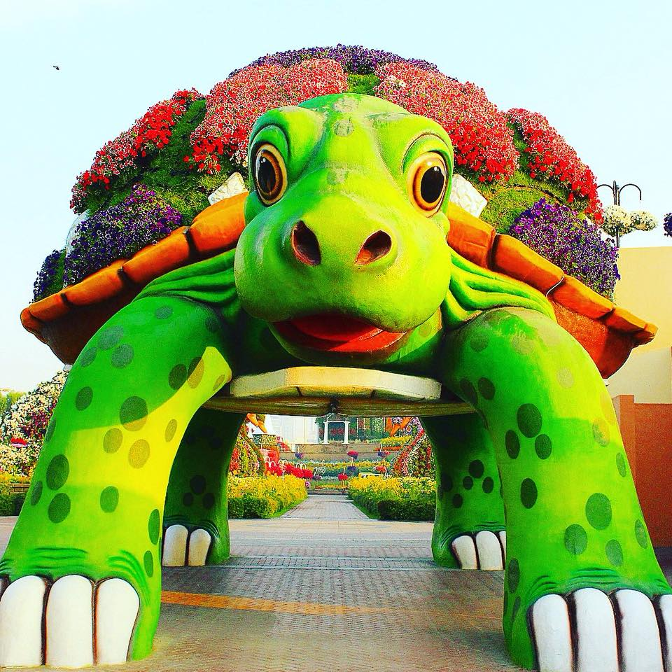 beautiful garden tortoise dubai miracle garden