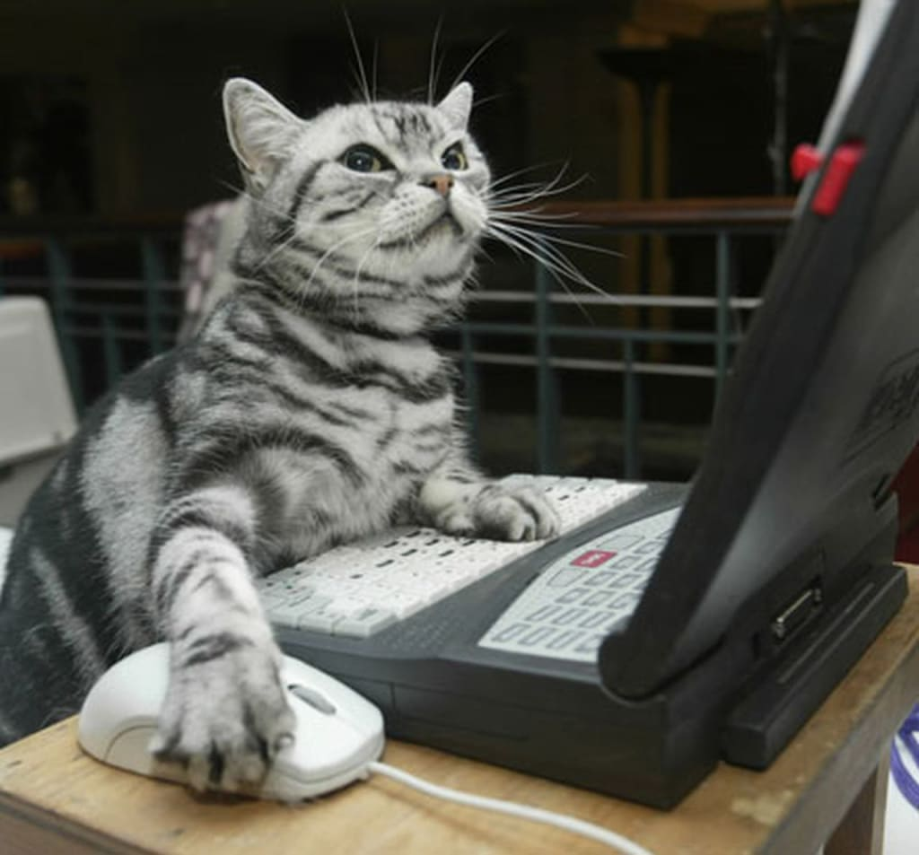 funny cat working computer photo