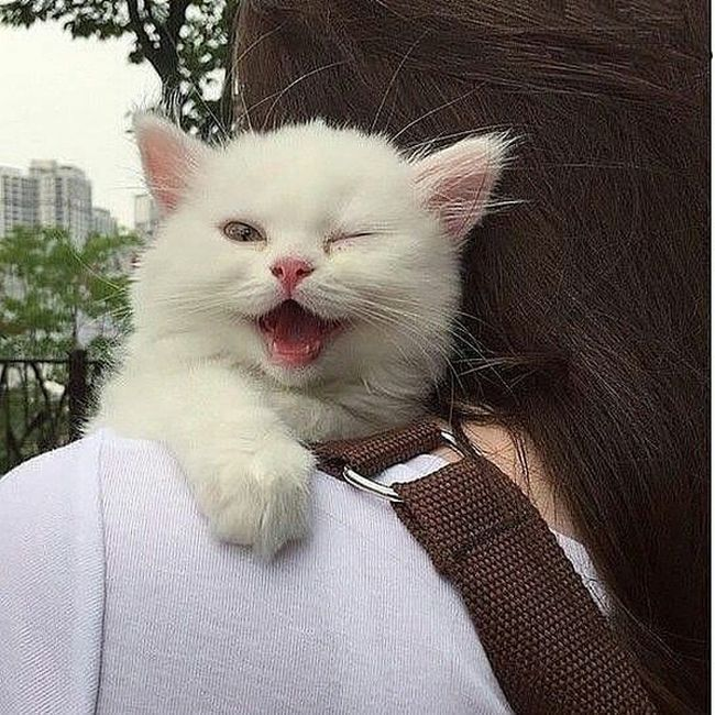 funny cat its master image
