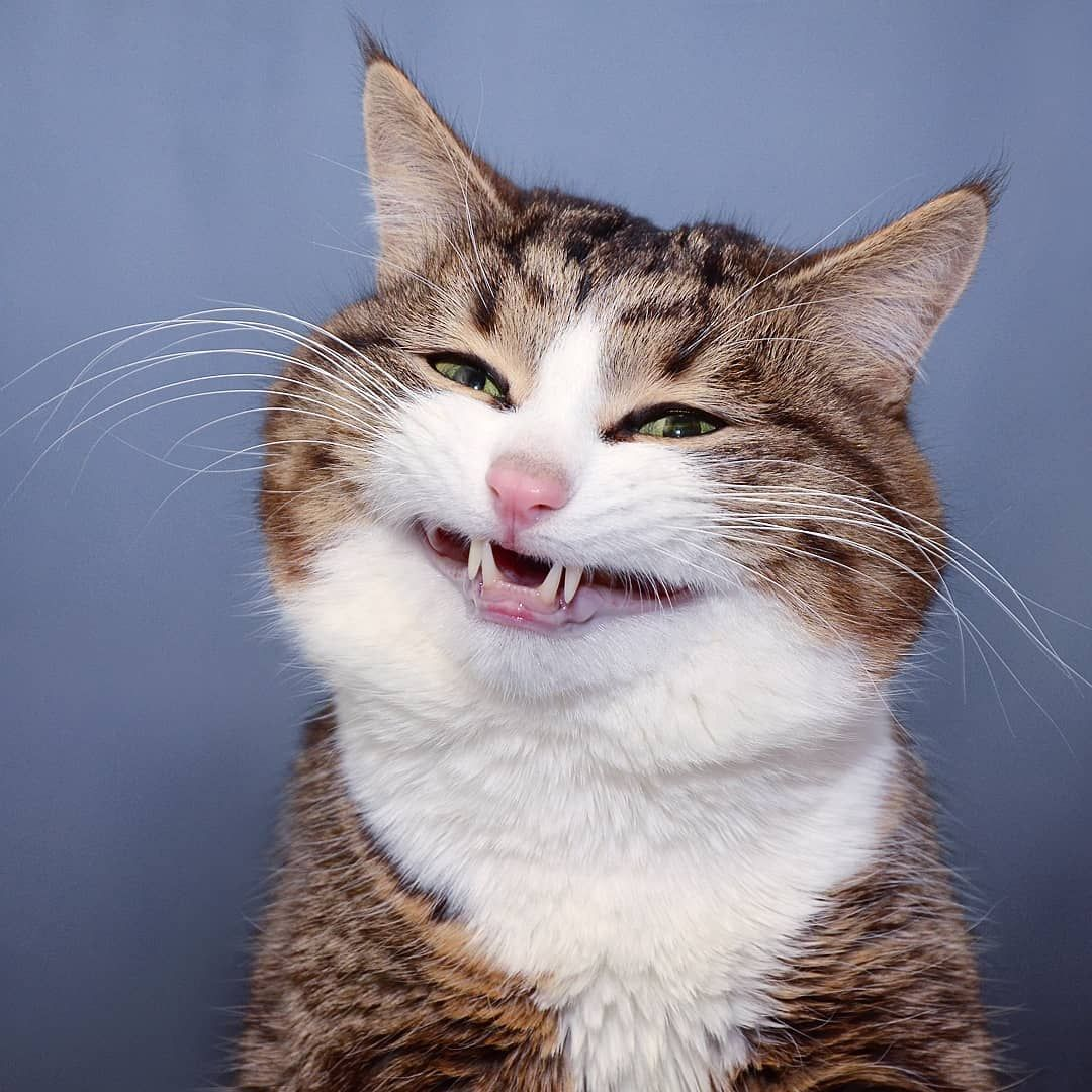 funny cat smiling photo