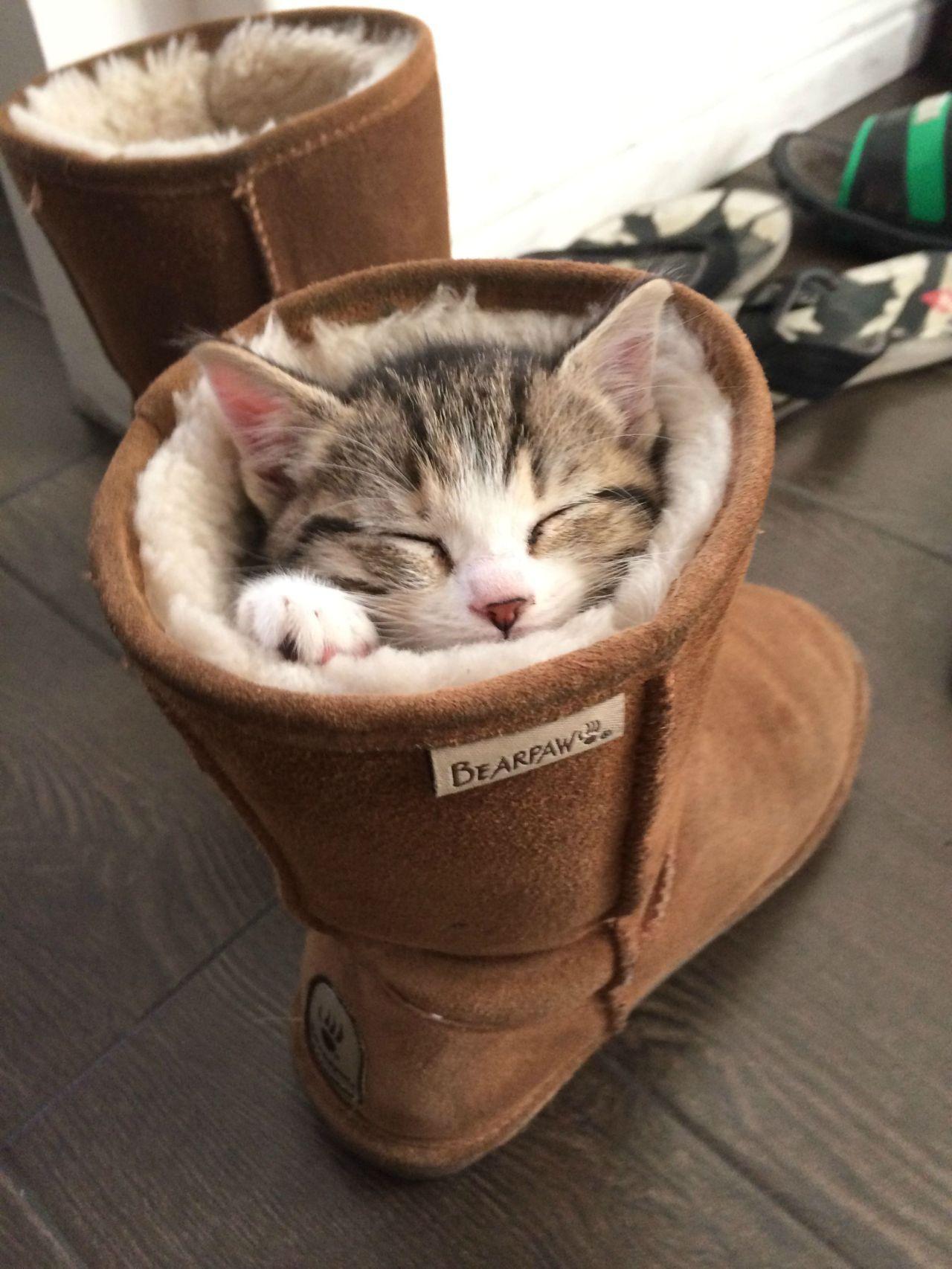 cute cat sitting shoe image