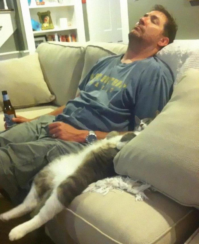 funny cat sleeping image