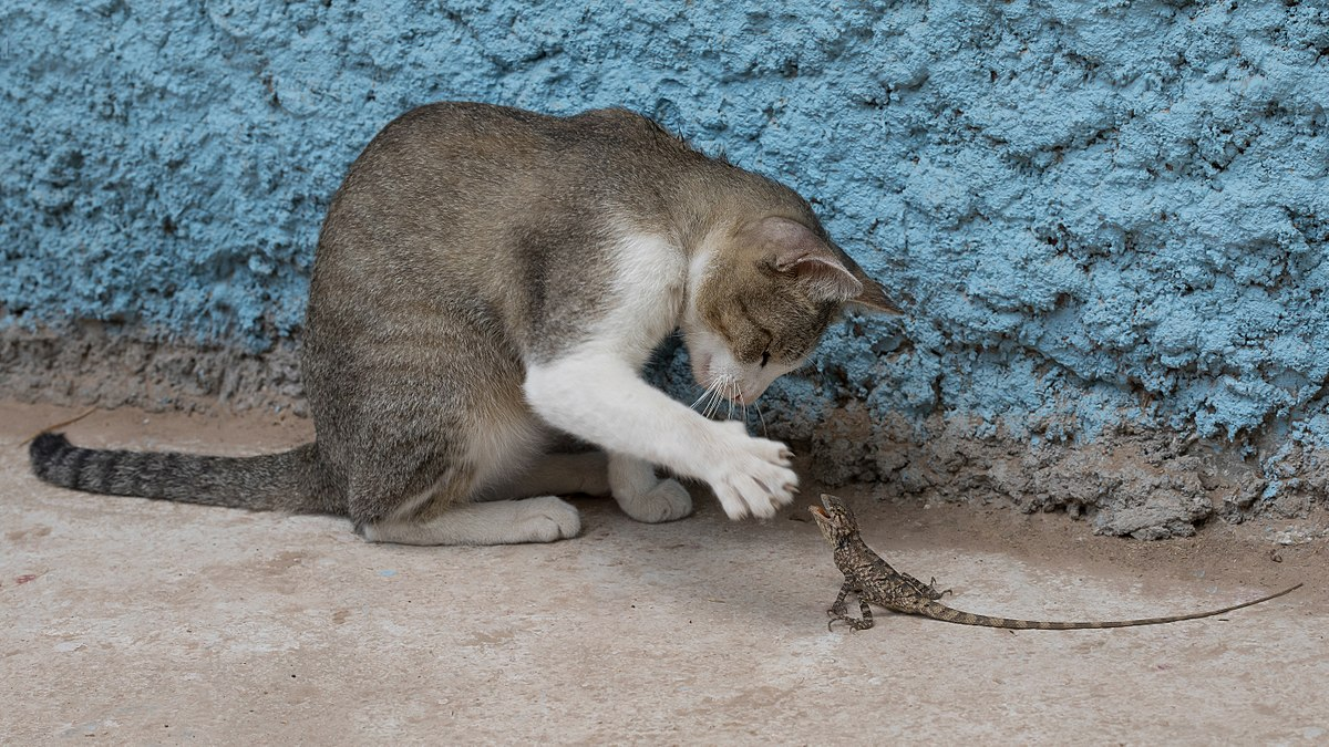 funny cat palying insect photo