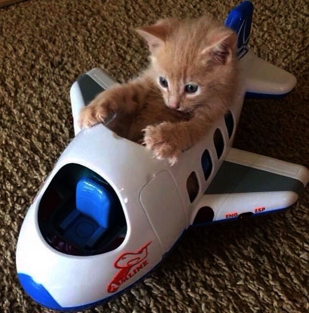 cute cat toy picture