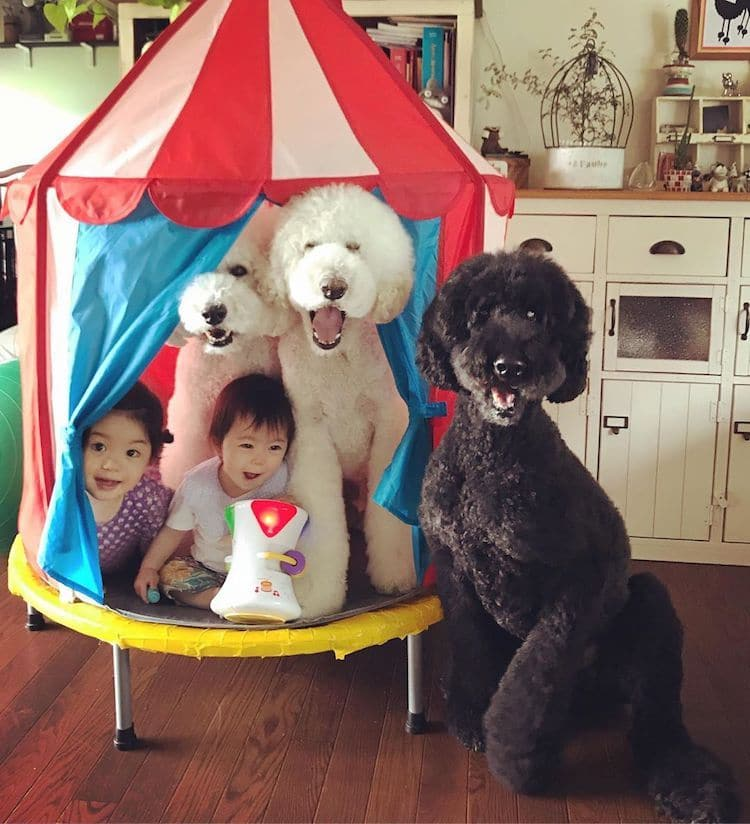 adorable kids dog friends japan