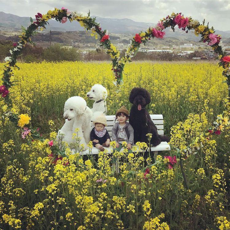 adorable kids dog friends japan