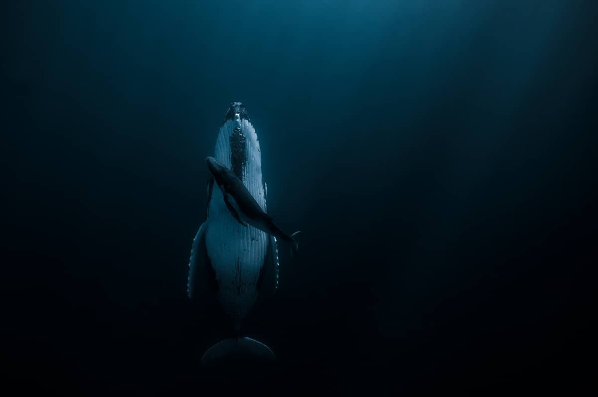 beautiful whale picture jasmine carey