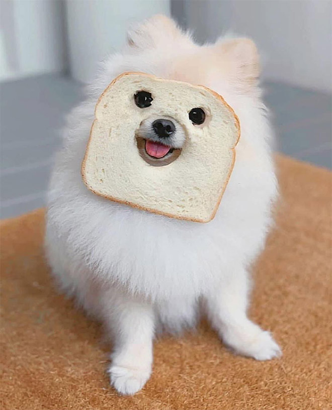 funny inbread dog photo