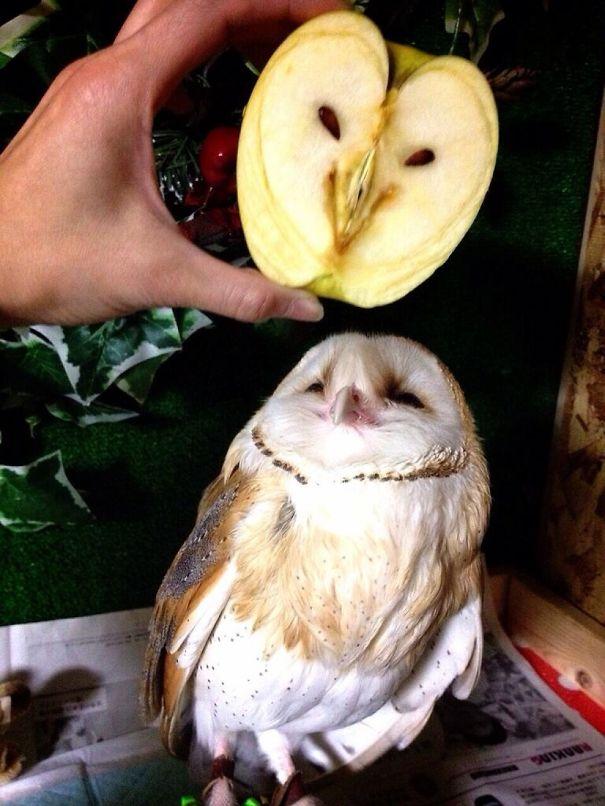funny optical illusion image apple