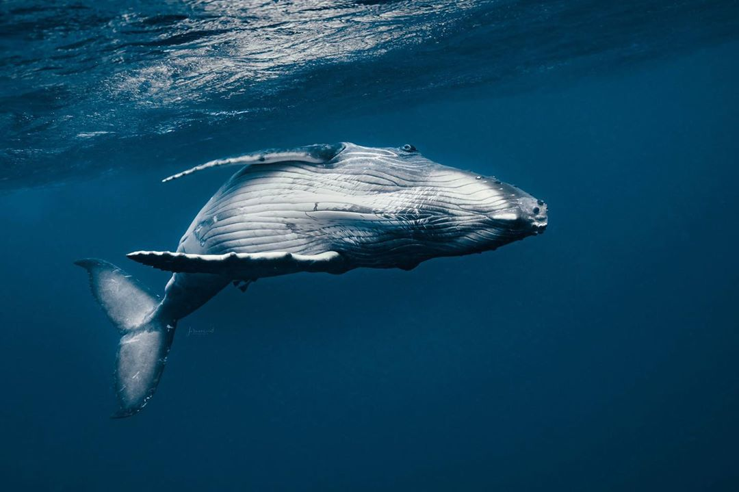 beautiful whale image jasmine carey