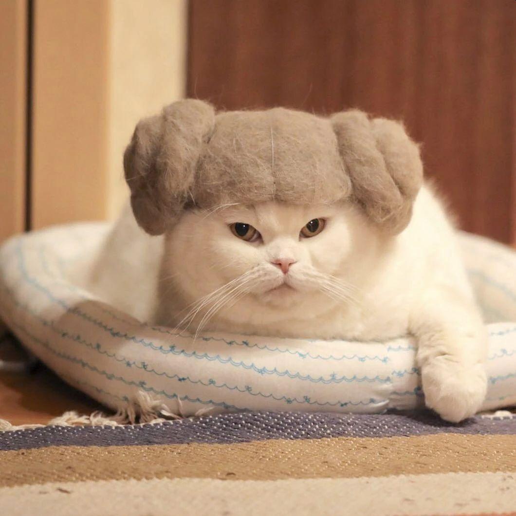funny cat hat own fur beautiful ryo yamazaki