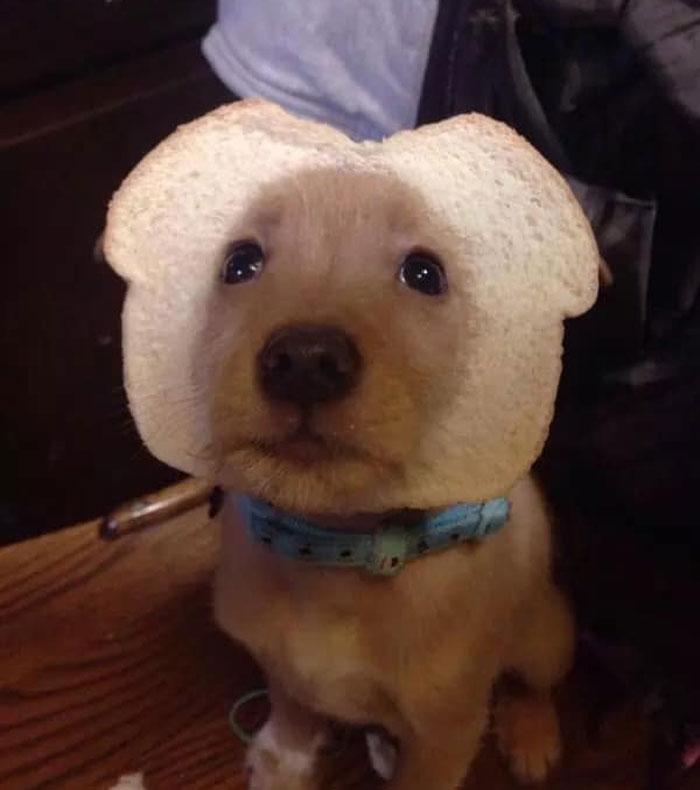 funny inbread dog picture
