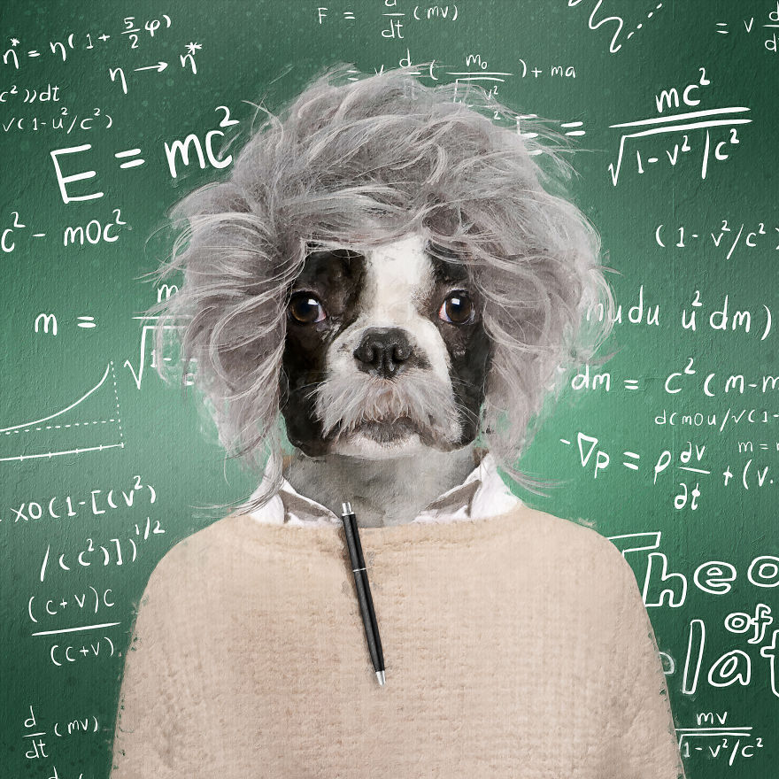 funny pet superstar albark einstein andreas haggkvist