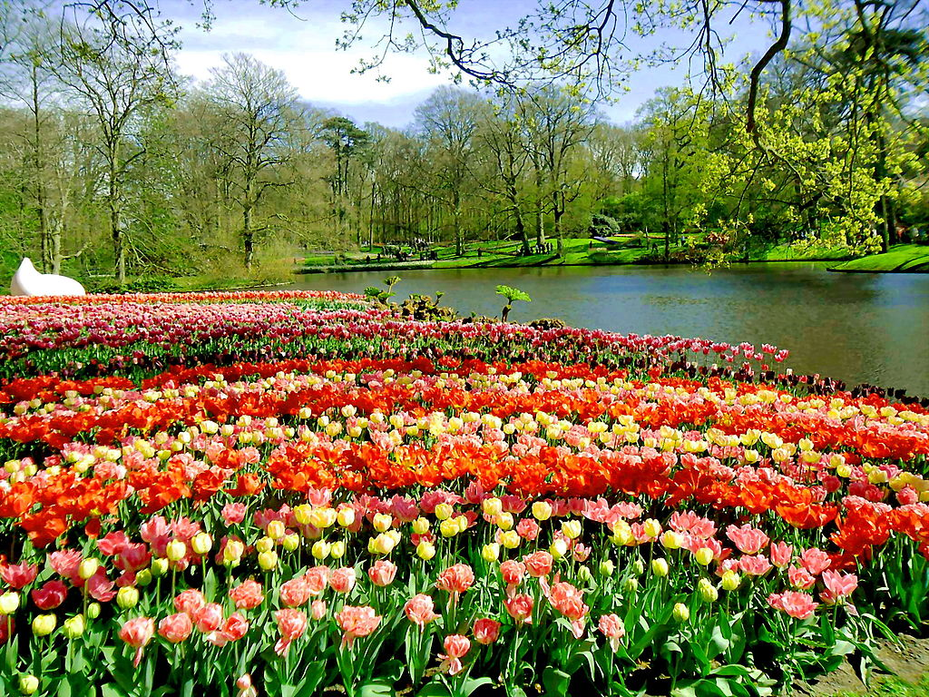 beautiful keukenhof garden holland