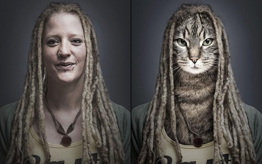 funny photo manipulation cat similar face sebastian magnani