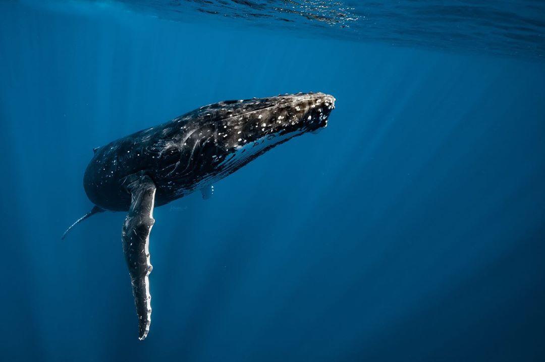 beautiful whale picture jasmine carey