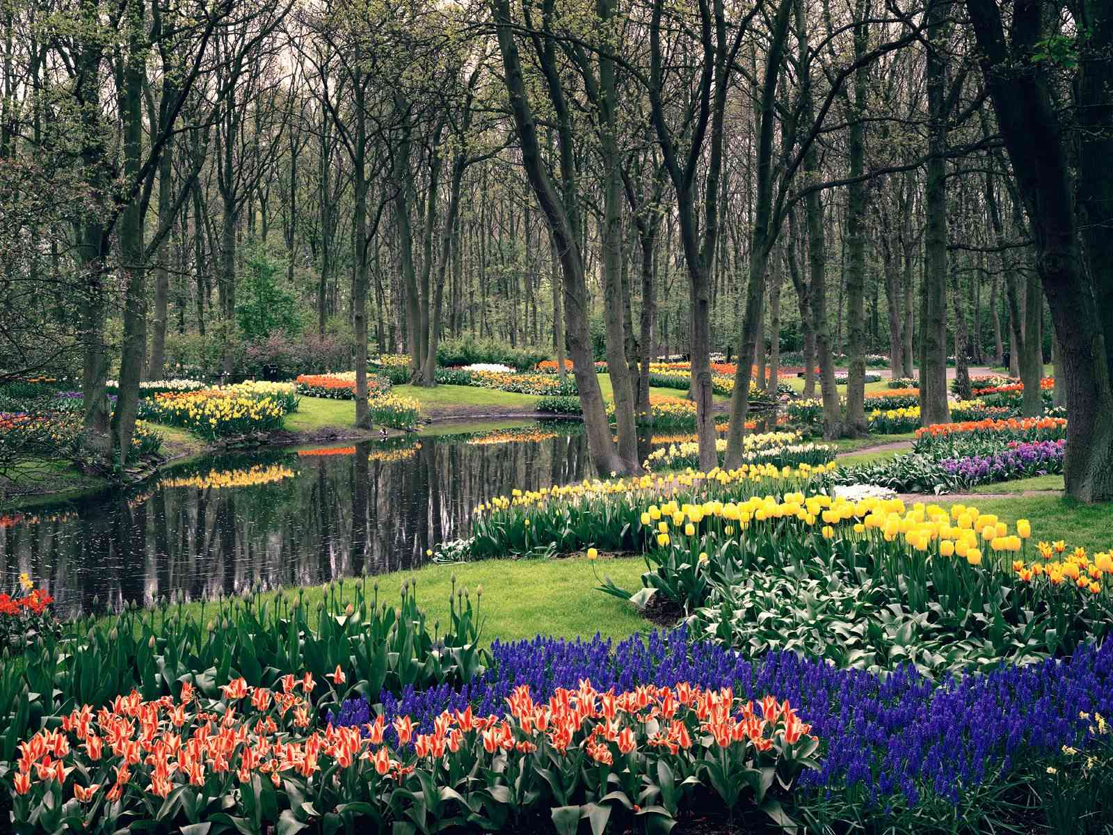 beautiful keukenhof gardens lisse