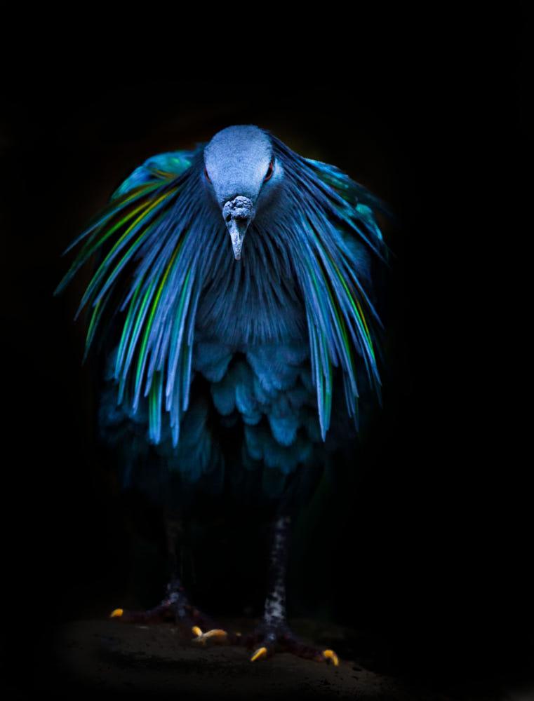 beautiful pigeon picture sue demetriou