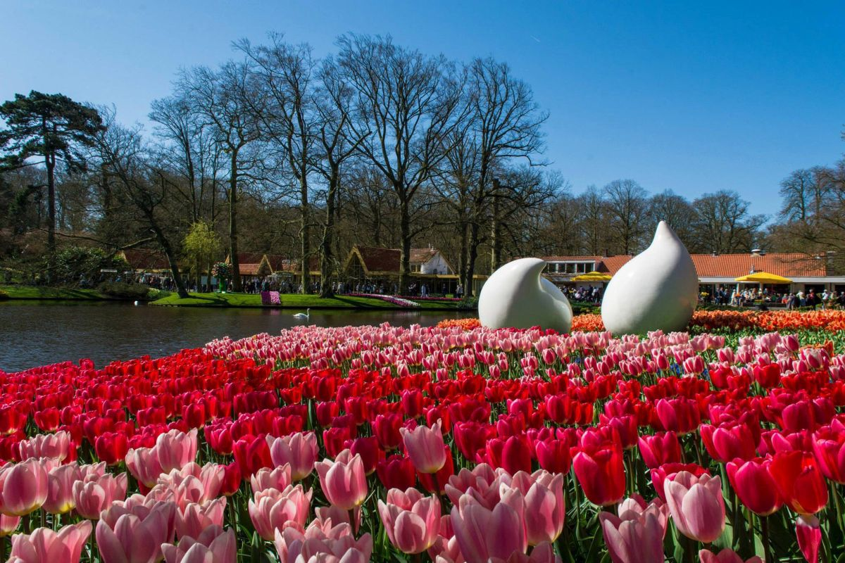 beautiful tulip garden jonas burm