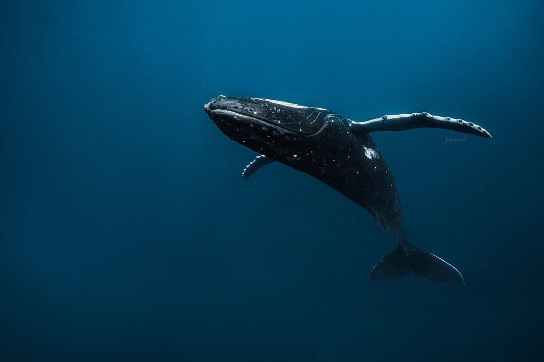 beautiful whale photograph jasmine carey