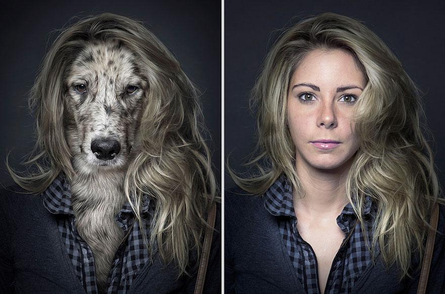 funny photo manipulation dog similar face sebastian magnani