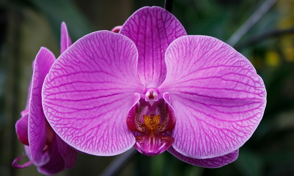 amazing unusual shape flower image moth orchid