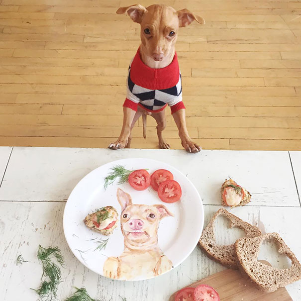 funny image dog staring their food