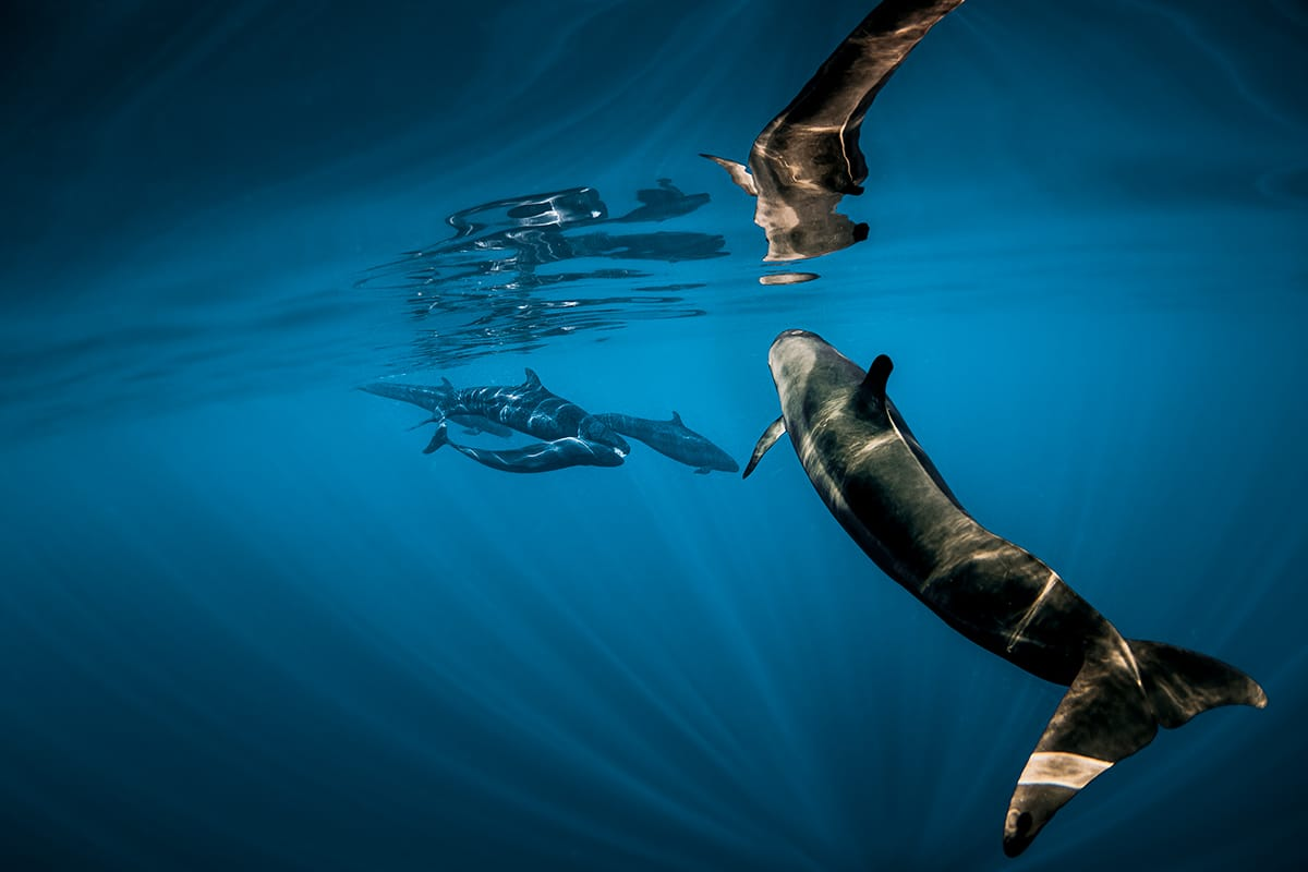 beautiful whale photo jasmine carey