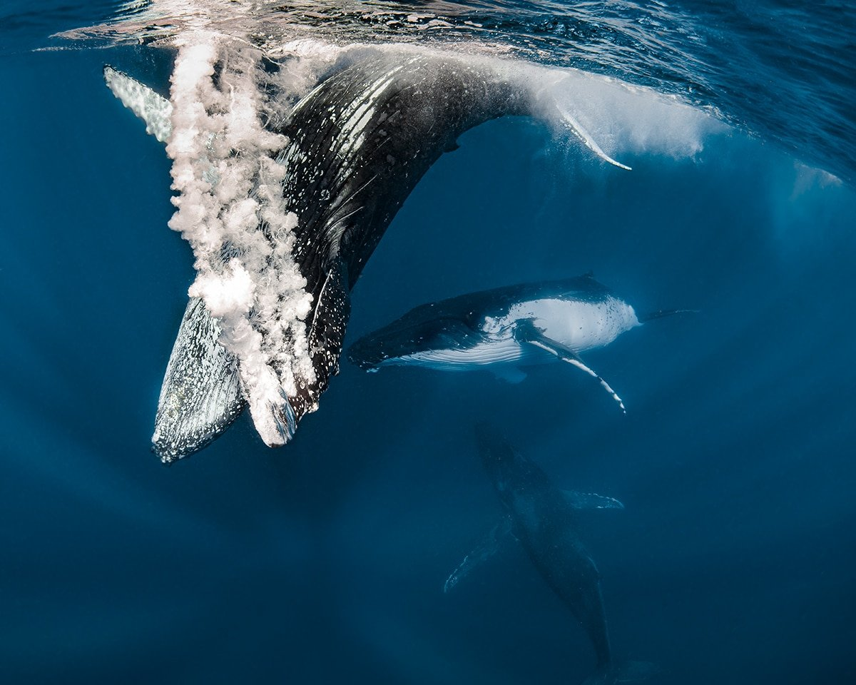 beautiful whale photo jasmine carey
