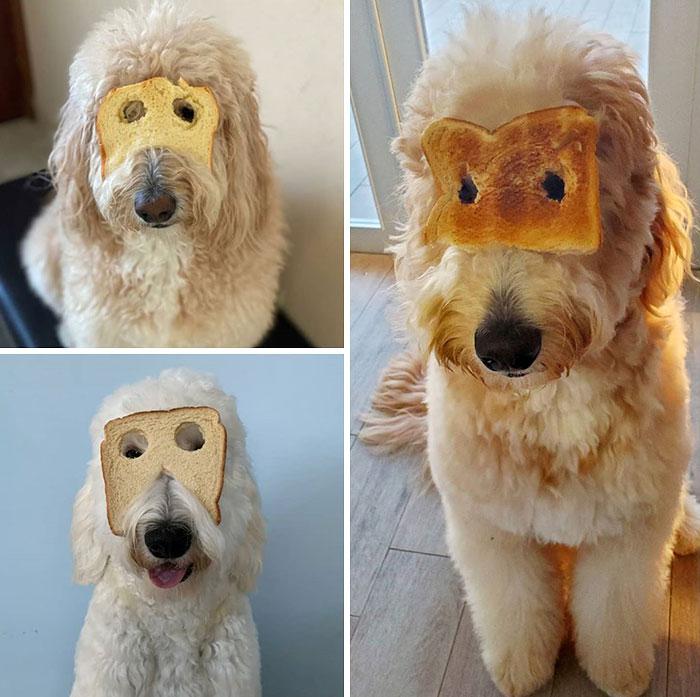 funny inbread dog image