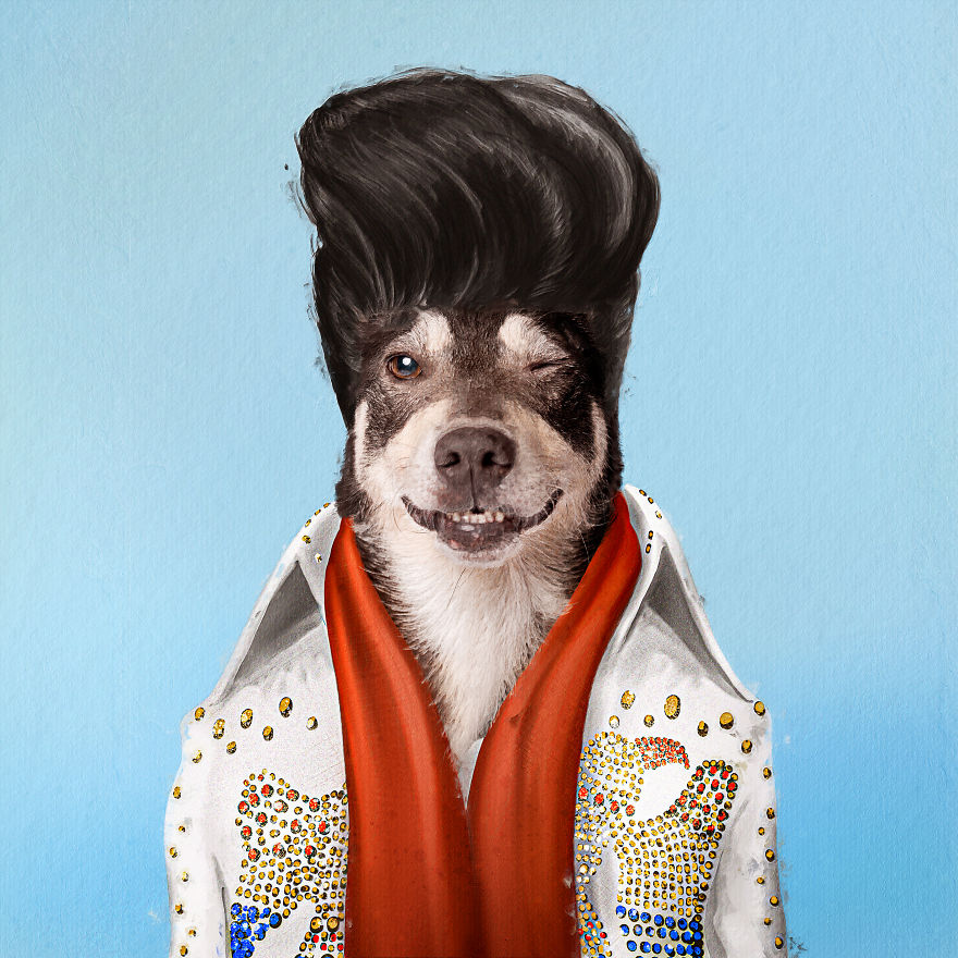 funny pet superstar elvis pupsley andreas haggkvist