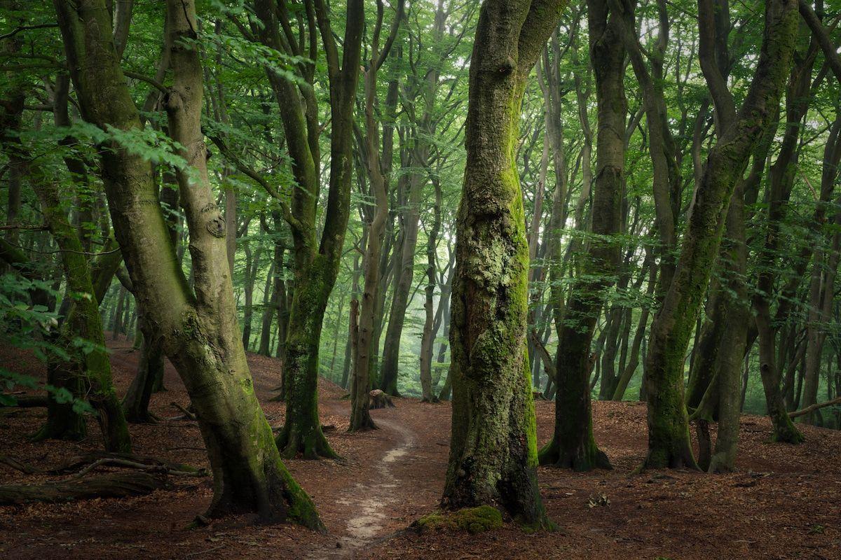 beautiful speulderbos seasonal forest photo albert dros
