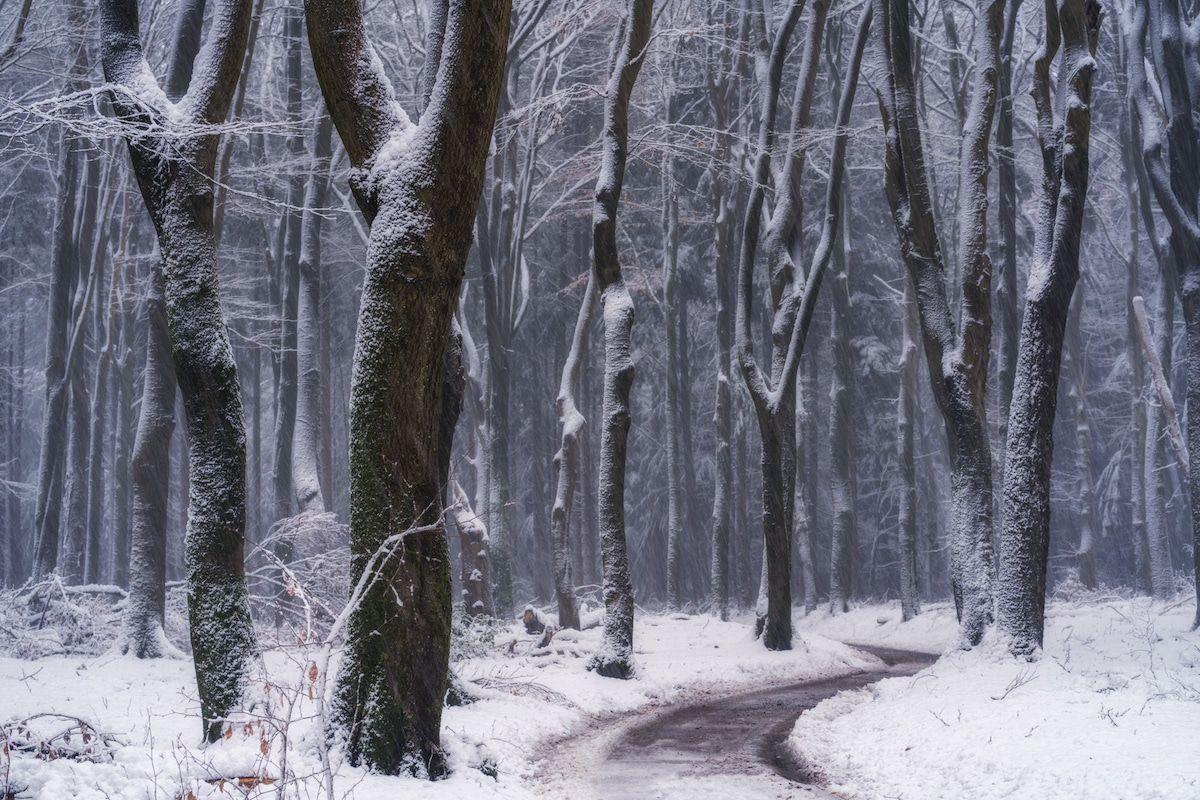beautiful winter season forest image albert dros