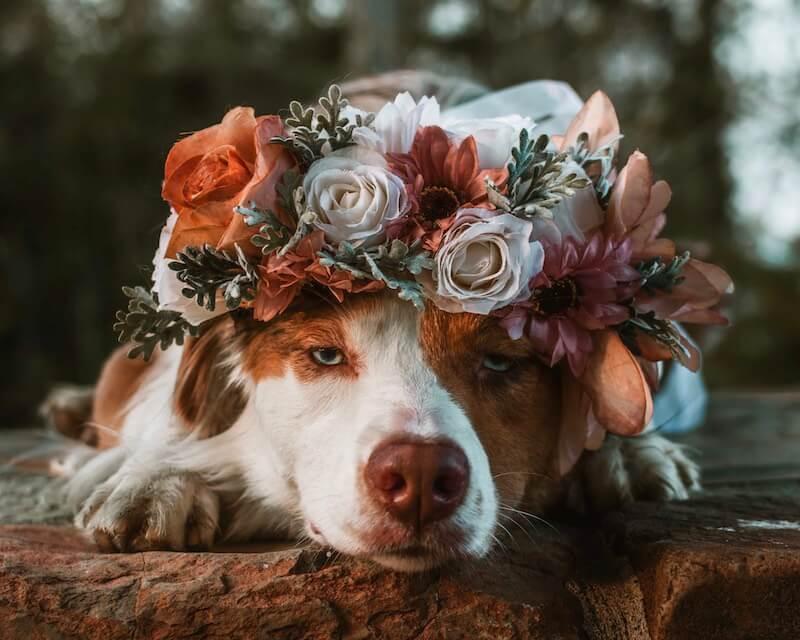 beautiful floral crown pet freyas floral company