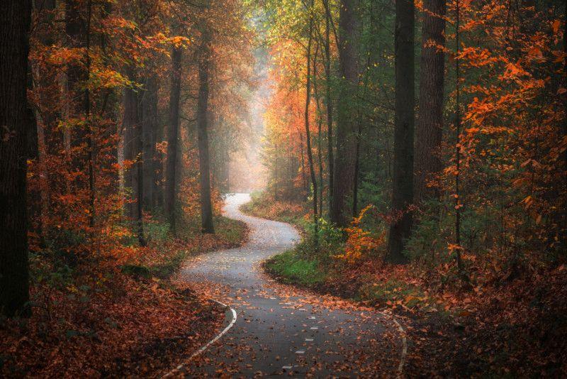 stunning seasonal forest photo albert dros
