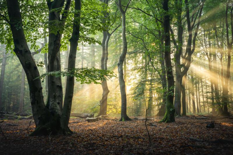 stunning summer season forest photo albert dros