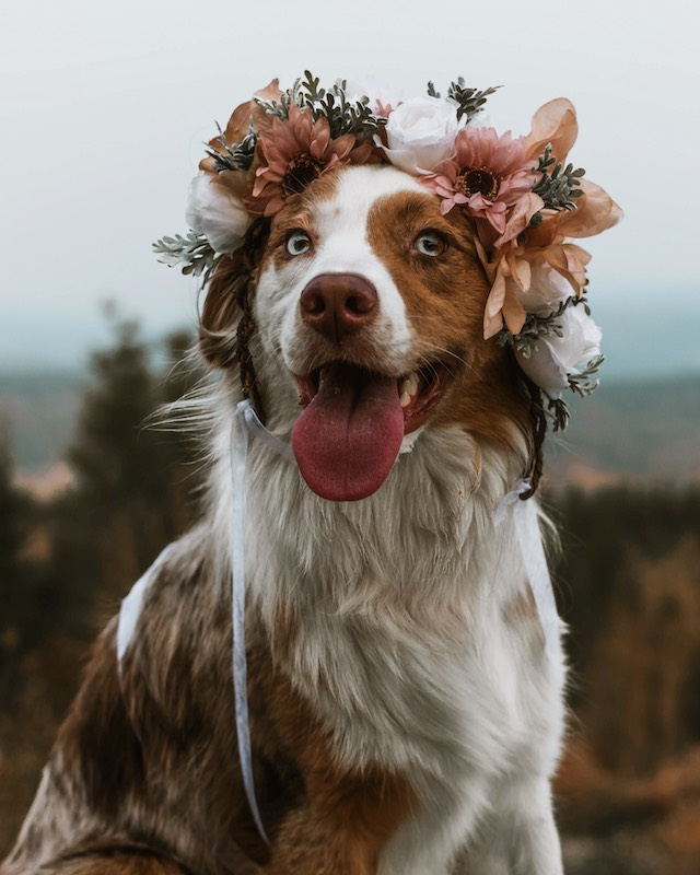 beautiful floral crown dog freyas floral company