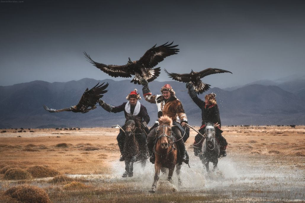 beautiful mongolian eagle photography daniel kordan