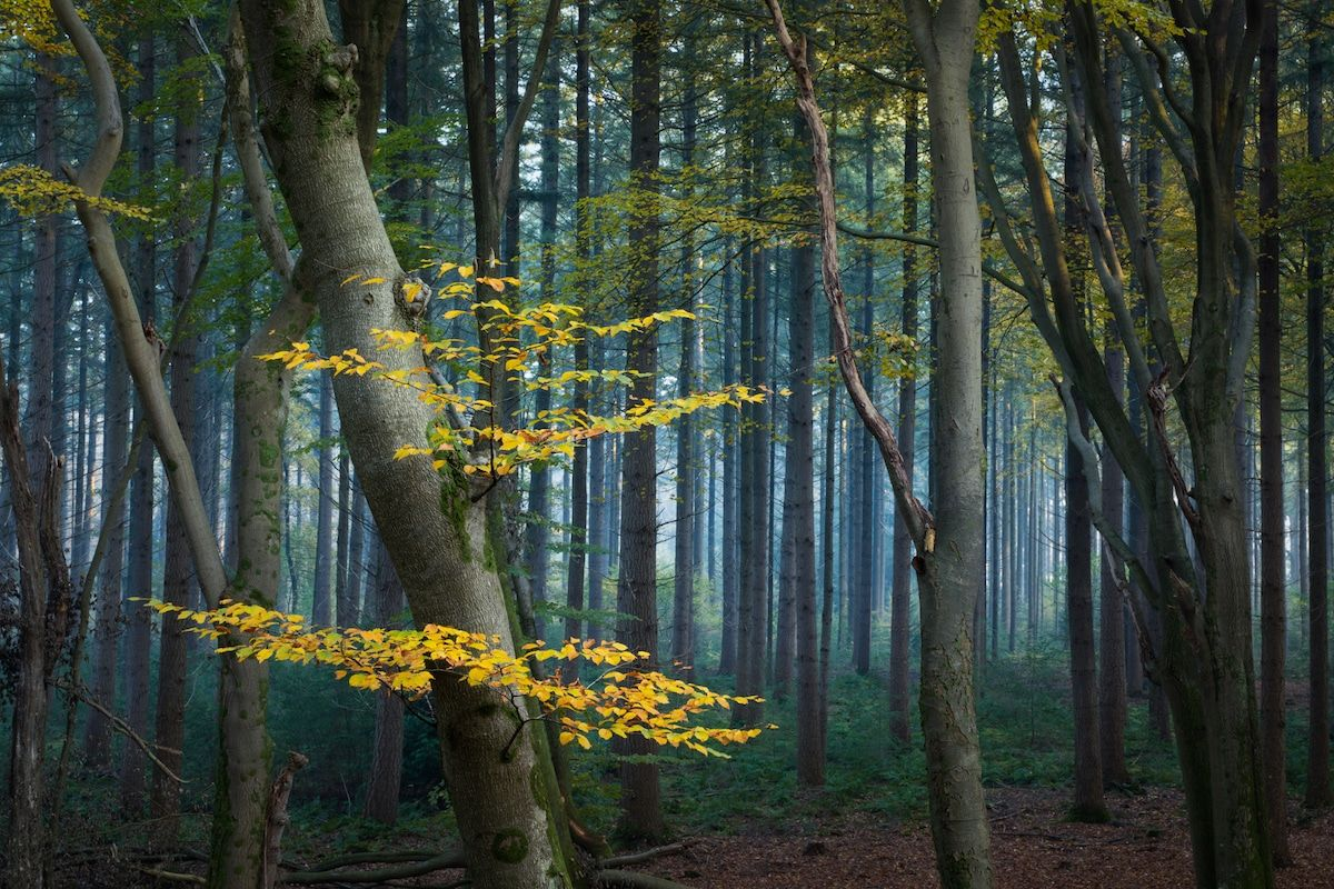beautiful seasonal forest photo albert dros