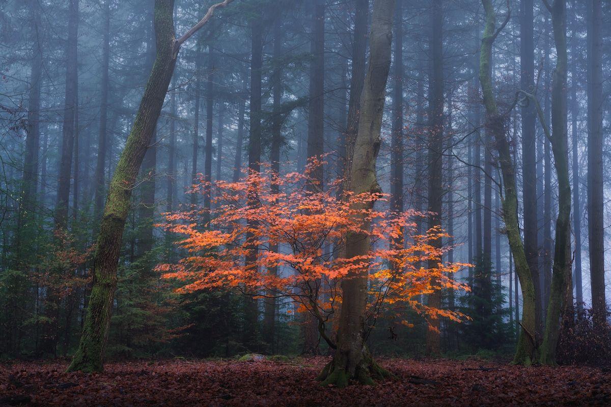 amazing spring season forest image albert dros
