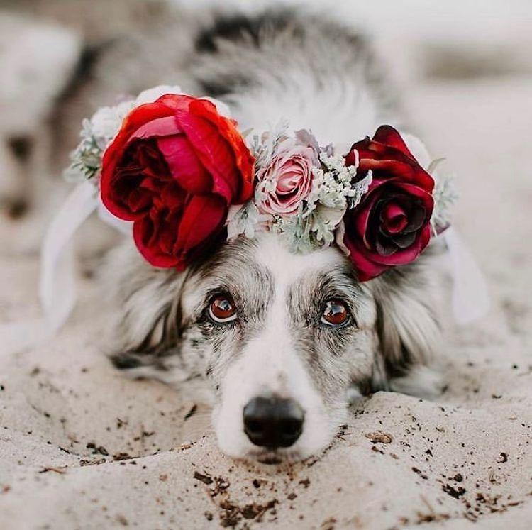 beautiful flower crown dog freyas floral company
