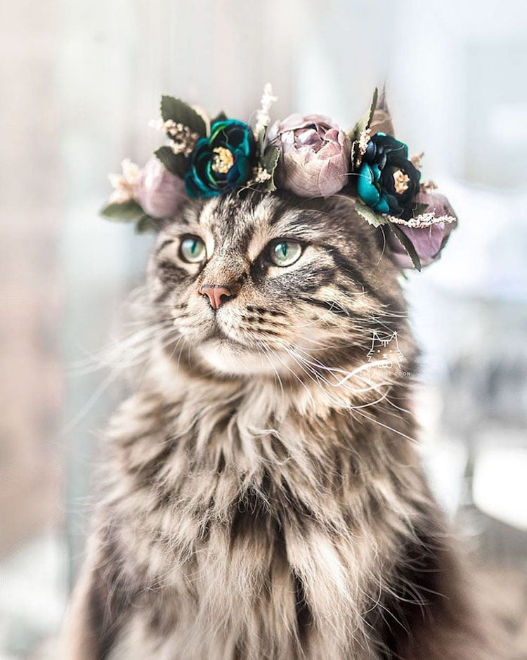 beautiful flower crown cat freyas floral company