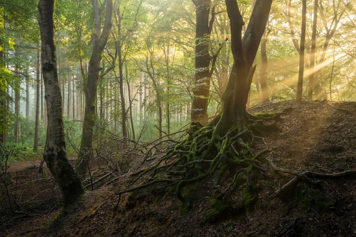 beautiful summer season forest image albert dros