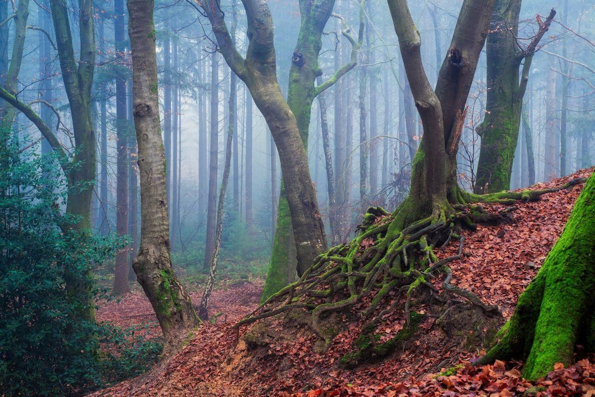 amazing seasonal forest photo albert dros