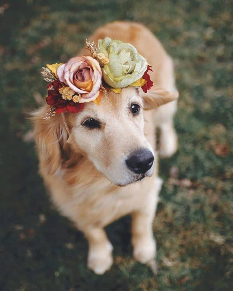 beautiful flower crown pet freyas floral company