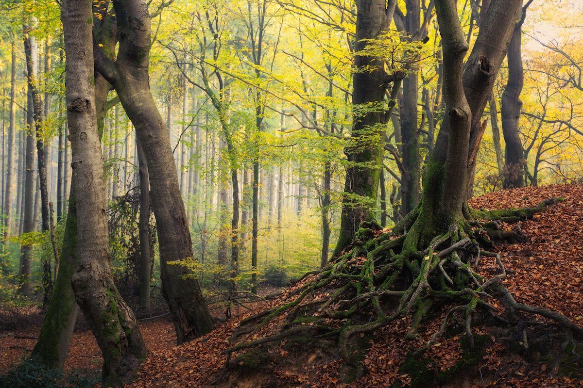 beautiful seasonal forest image albert dros