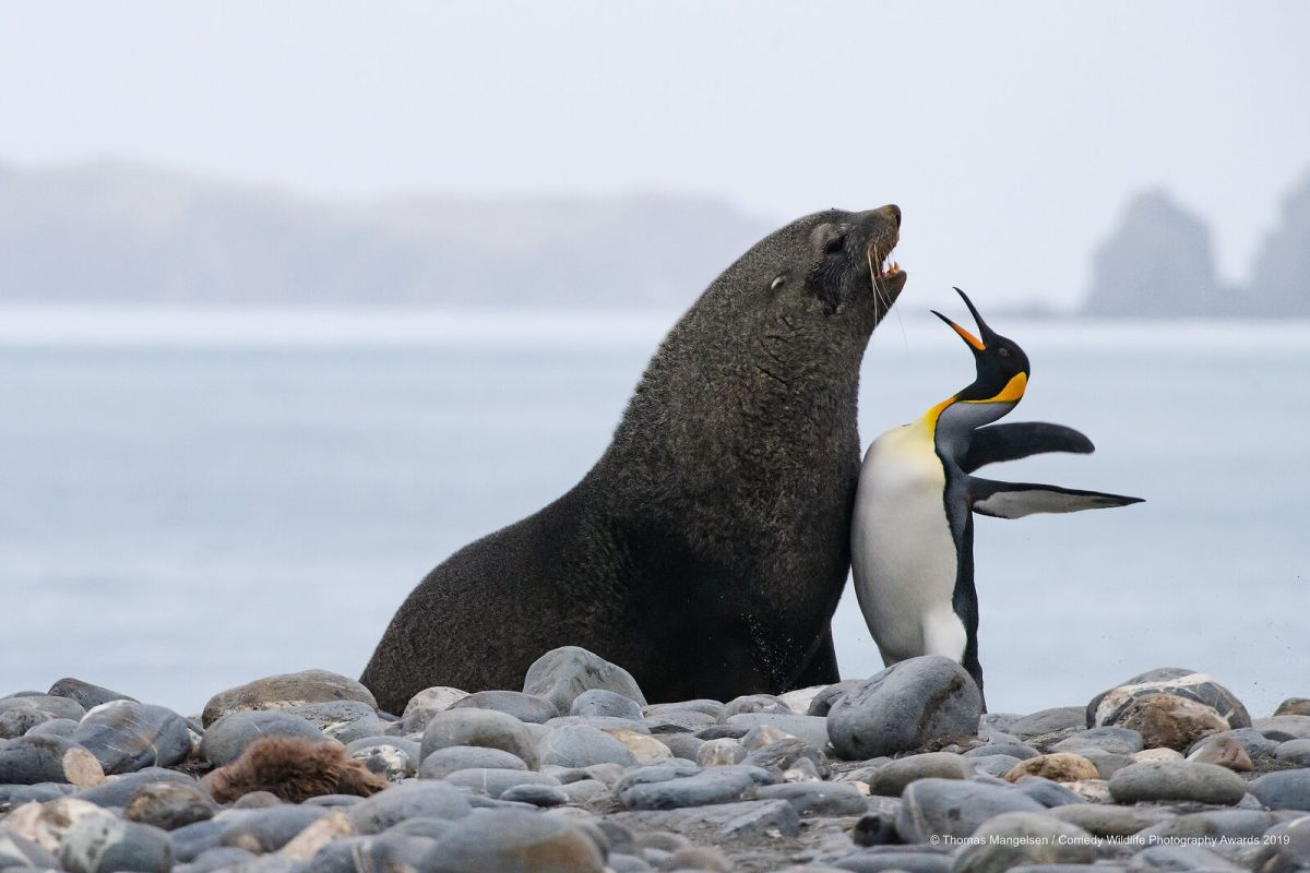 funny wildlife photography penguin seal fight